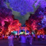 幻想的な雰囲気のニューイベント。下鴨神社「糺ノ森の光の祭」【Nikon D500で撮る】