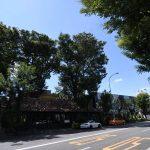 目黒川から代官山へ。おしゃれな街並みの写真いろいろ