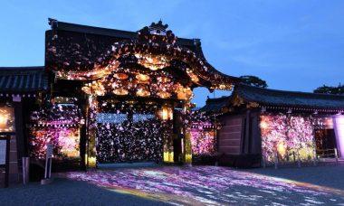 二条城「桜まつり2017」