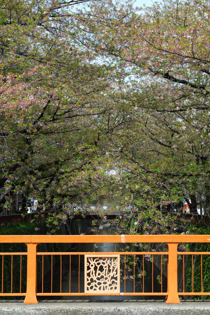 天神橋からの桜並木