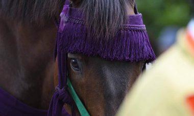 葵祭で活躍する馬
