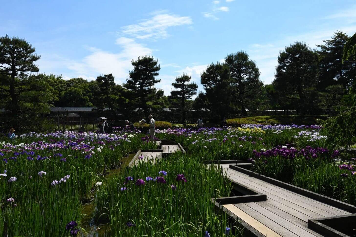京都府立植物園のはなしょうぶ園