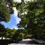 """<span class=""""title"""">NIKKOR 10-20mm f/4.5-5.6Gで撮る永観堂の青もみじ</span>"""