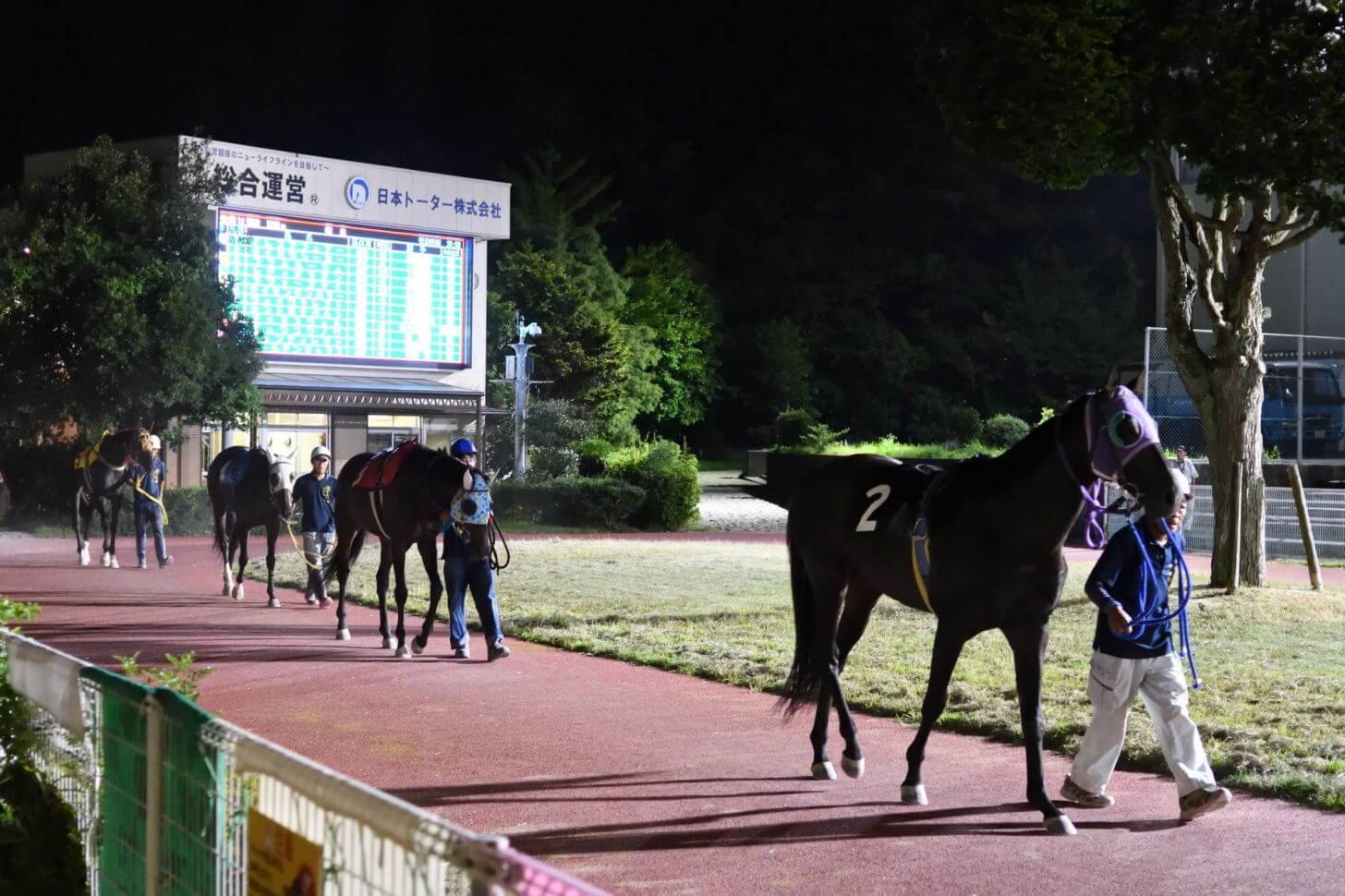 夜の高知競馬場のパドックを歩く馬