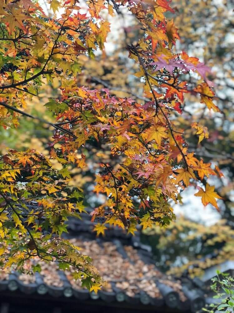 iPhoneXポートレートモードで撮る梨木神社染井の井戸の紅葉