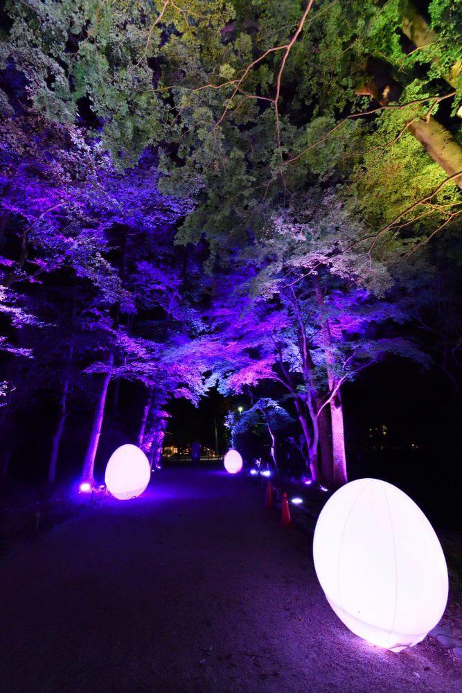 糺の森の光の祭2018