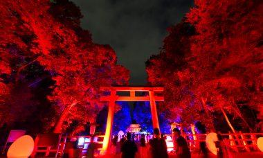 下鴨神社「糺の森の光の祭2018」