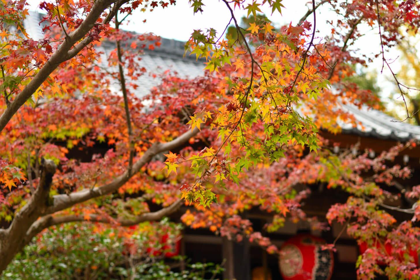 赤山禅院 地蔵尊の紅葉
