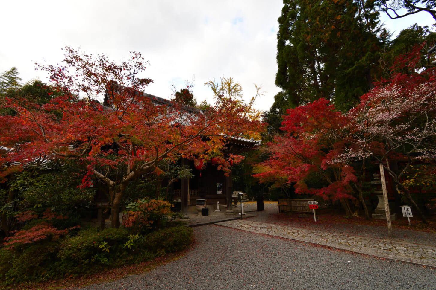 赤山禅院 地蔵尊周りの紅葉