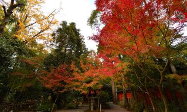 赤山禅院 弁財天前の紅葉