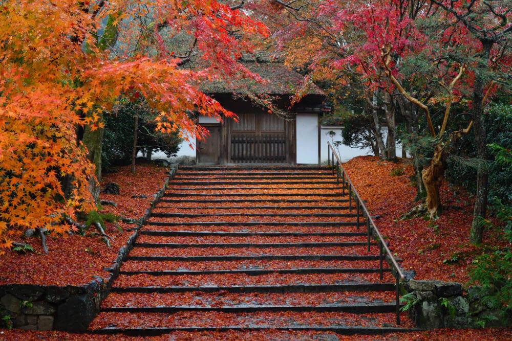 安楽寺の散り紅葉