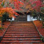 雨でより艶やかに。京都・安楽寺の散り紅葉(2018.12.6訪問)【Nikon D500で撮る】