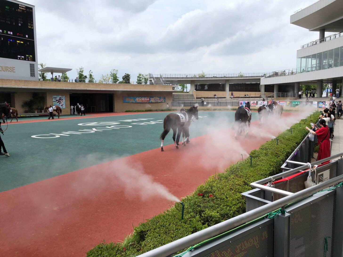 夏の中京競馬場パドック
