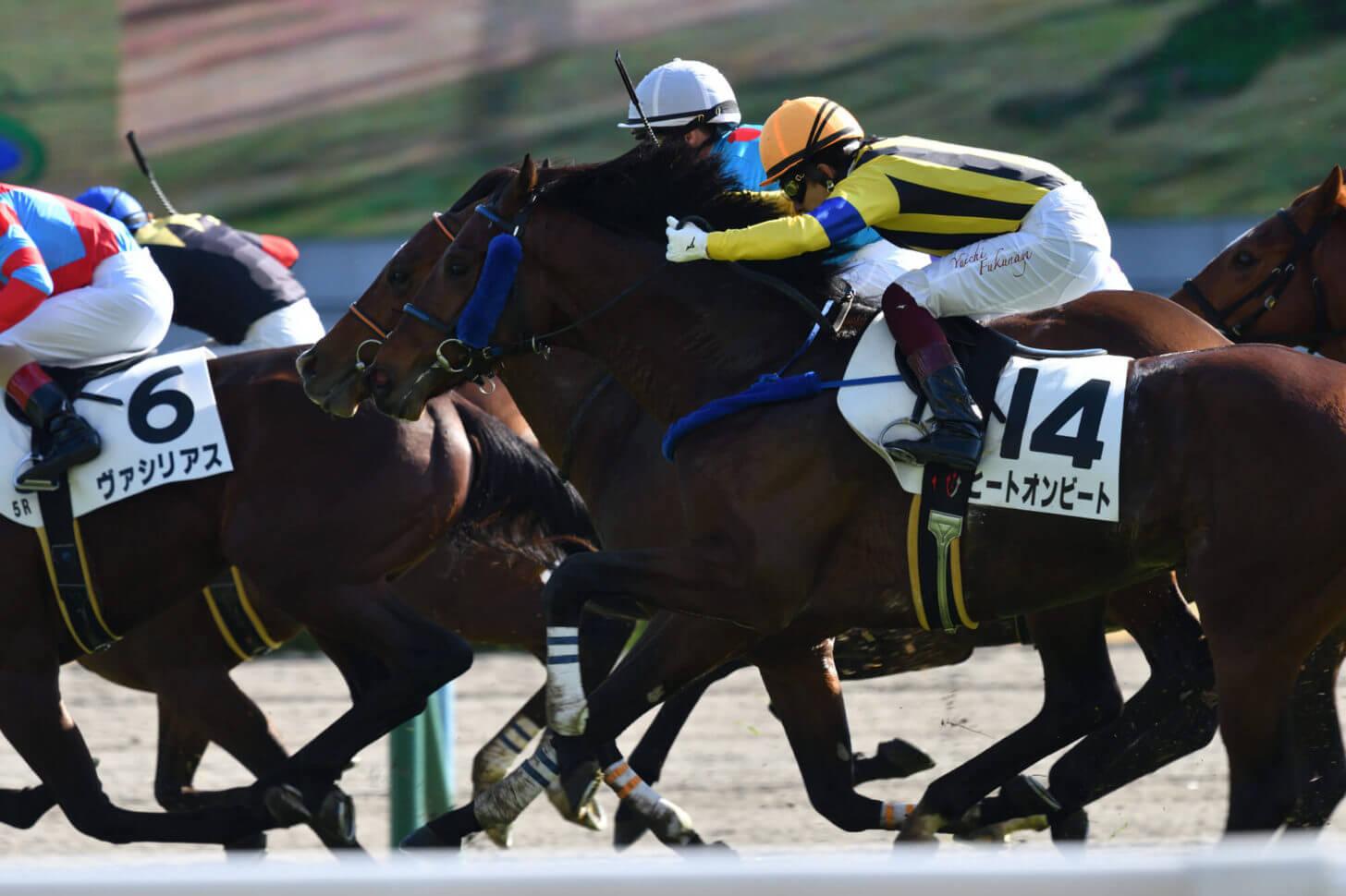 ハーツクリスタルとヒートオンビートの併せ馬
