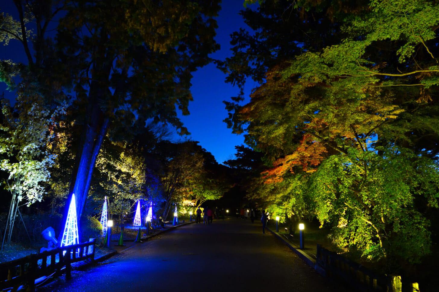 京都府立植物園「世界の紅葉ライトアップ」