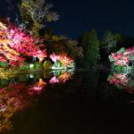 "<span class=""title"">京都府立植物園「世界の紅葉ライトアップ」に行ってきた</span>"