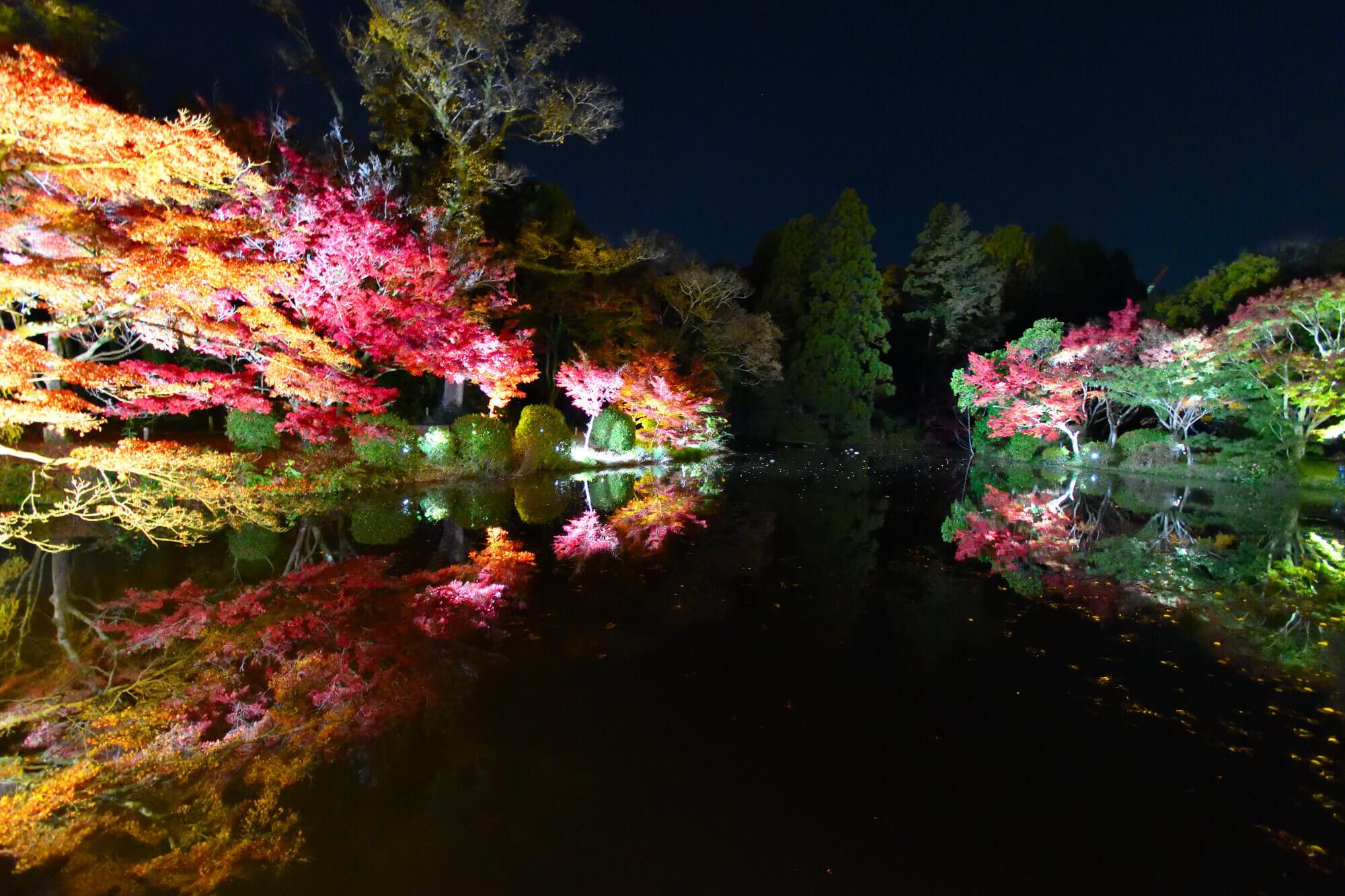 京都府立植物園「世界の紅葉ライトアップ」のリフレクション