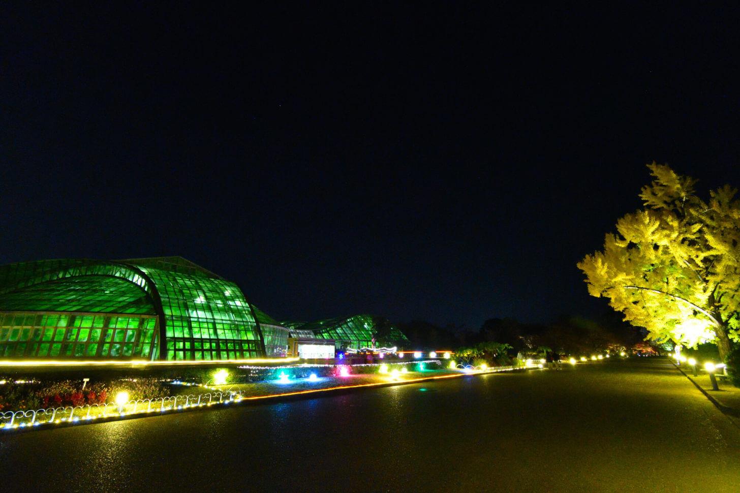 京都府立植物園「世界の紅葉ライトアップ」での観覧温室