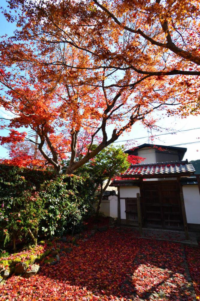 岩倉具視幽棲旧宅 表門裏の紅葉