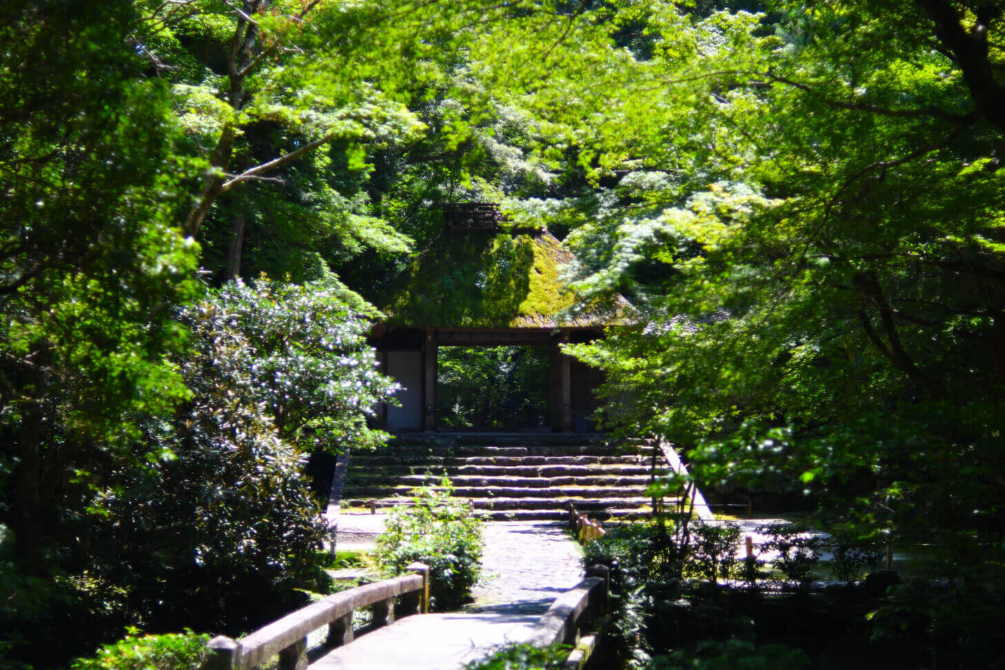 新緑の法然院